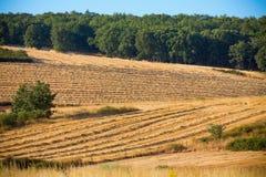 Cosecha, campos y paisajes del trigo Imagenes de archivo