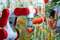 Cosecha con los granjeros robóticos elegantes en la automatización futurista del robot de la agricultura a trabajar para rociar e imagen de archivo libre de regalías