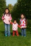Cosecha de Apple de las hermanas Foto de archivo libre de regalías
