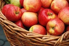 Cosecha de Apple en una cesta Imagen de archivo libre de regalías