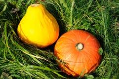 Cosecha de calabazas en hierba Foto de archivo libre de regalías
