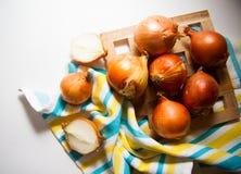 Cosecha de cebollas foto de archivo libre de regalías