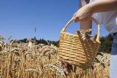 Cosecha de grano Foto de archivo libre de regalías