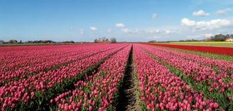 Cosecha de Holanda Foto de archivo libre de regalías