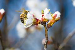 Cosecha de la abeja Fotos de archivo