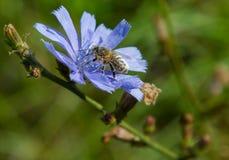 Cosecha de la abeja Imagen de archivo libre de regalías