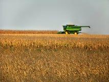 Cosecha de la caída de la cosecha mecanizada del maíz en el Estado de Nueva York Imagen de archivo libre de regalías