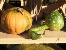 Cosecha de la calabaza Calabazas de Víspera de Todos los Santos Fondo rústico rural del otoño con el tuétano vegetal Imágenes de archivo libres de regalías