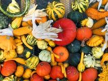 Cosecha de la calabaza Calabazas de Víspera de Todos los Santos Fondo rústico rural del otoño con el tuétano vegetal Fotografía de archivo
