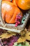 Cosecha de la calabaza en cesta Imagen de archivo libre de regalías