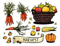 Cosecha de la calabaza, de la manzana, de la zanahoria, del albaricoque y de la calabaza Fotografía de archivo