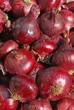 Cosecha de la cebolla roja Imagenes de archivo