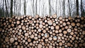 Cosecha de la madera Imagenes de archivo