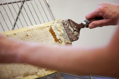 Cosecha de la miel fresca de la colmena de la abeja Imagen de archivo libre de regalías