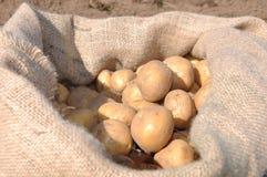 Cosecha de la patata Fotos de archivo