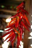 Cosecha de la pimienta Imagen de archivo libre de regalías