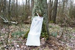 Cosecha de la savia del abedul en un bosque de la primavera Fotografía de archivo libre de regalías