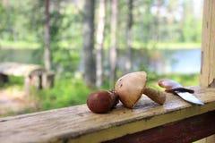 Cosecha de la seta en Finlandia Fotografía de archivo libre de regalías
