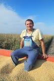 Cosecha de la soja Imagen de archivo