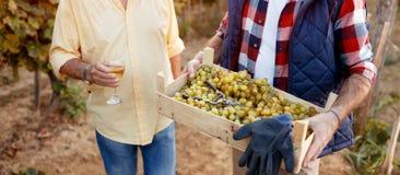 Cosecha de la tradición de la familia de las uvas fotos de archivo libres de regalías