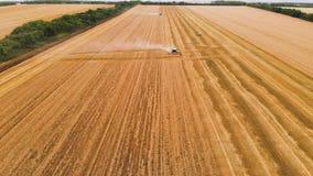 Cosecha de la visión aérea del trigo en verano M?quinas segadores que trabajan en el campo Máquina agrícola de la máquina segador almacen de video