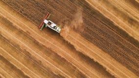 Cosecha de la visión aérea del trigo en verano M?quinas segadores que trabajan en el campo Máquina agrícola de la máquina segador almacen de metraje de vídeo