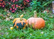 Cosecha de las calabazas de otoño Imagen de archivo