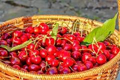Cosecha de las cerezas dulces maduras en una cesta de mimbre, primer Fotografía de archivo libre de regalías