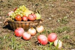 Cosecha de las frutas foto de archivo libre de regalías