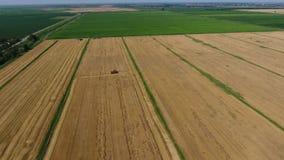Cosecha de máquinas segadores de la cebada Campos del trigo y de la cebada, el trabajo de la maquinaria agrícola Máquinas segador almacen de metraje de vídeo