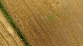 Cosecha de máquinas segadores de la cebada Campos del trigo y de la cebada, el trabajo de la maquinaria agrícola Máquinas segador almacen de video