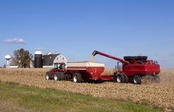 Cosecha de maíz Fotografía de archivo