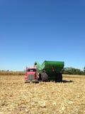 Cosecha de maíz con el camión rojo y el carro verde debajo del cielo soleado del verano Imagen de archivo