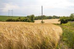 Cosecha de maíz del trigo en Ucrania Fotografía de archivo