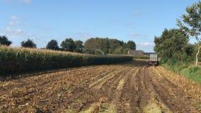 Cosecha de maíz, máquina segador de forraje del maíz en la acción, camión de la cosecha con el tractor metrajes