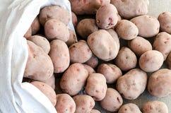 Cosecha de patatas Foto de archivo