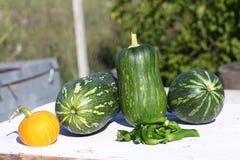 Cosecha de pimientos picantes y de calabazas verdes Imagen de archivo