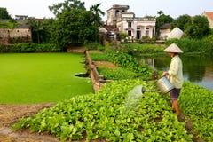 Cosecha de riego del granjero vietnamita Imagen de archivo