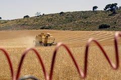 Cosecha de trigo Imagen de archivo libre de regalías