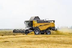 Cosecha de trigo con una máquina segadora Imagen de archivo libre de regalías