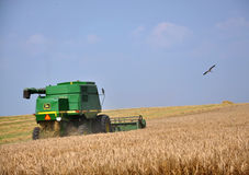 Cosecha de trigo en field_4 Fotografía de archivo