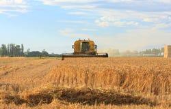 Cosecha de trigo en los llanos de Cantorbery Fotos de archivo
