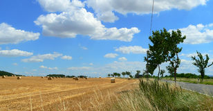 Cosecha de trigo en verano tardío en tiempo hermoso Imágenes de archivo libres de regalías