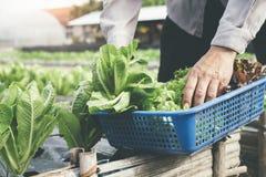 Cosecha de verduras del jardín fotos de archivo libres de regalías