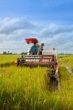 Cosecha del arroz Foto de archivo libre de regalías