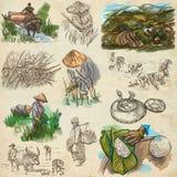 Cosecha del arroz Agricultura Un ejemplo dibujado mano Imagenes de archivo