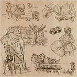Cosecha del arroz Agricultura Un sistema dibujado mano del vector Imagen de archivo
