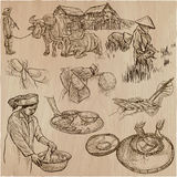 Cosecha del arroz Agricultura Un sistema dibujado mano del vector Imagenes de archivo