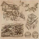 Cosecha del arroz Agricultura Un sistema dibujado mano del vector libre illustration