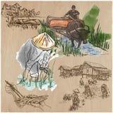 Cosecha del arroz Agricultura Un sistema dibujado mano del vector Foto de archivo libre de regalías